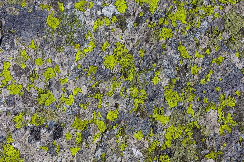 Pietra o roccia con struttura della pianta del muschio fotografie stock