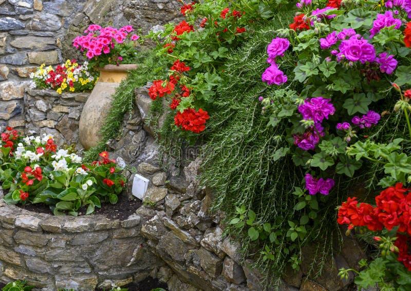 Pietra plantare con i gerani rossi e porpora e le begonie rosse e bianche in Camoglia, Italia immagine stock libera da diritti