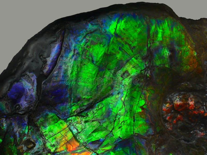 Pietra preziosa rara Ammolite, ammonite fossile, Canada fotografia stock libera da diritti