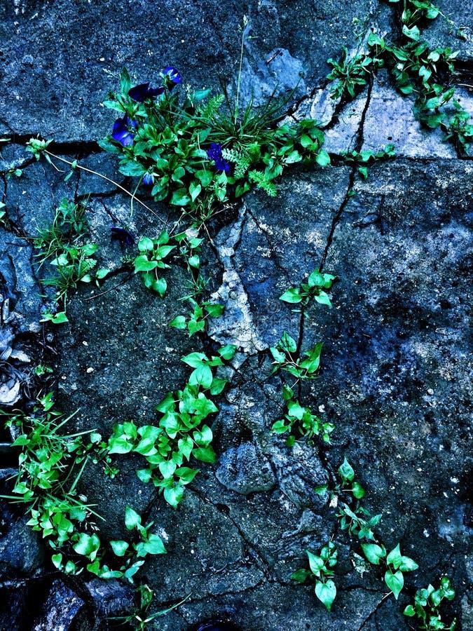 Pietra verde del fiore fotografia stock