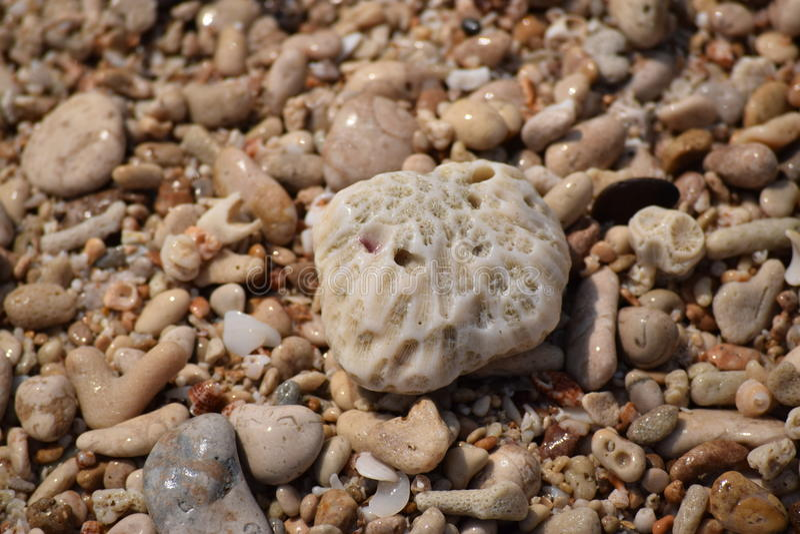 Pietre bagnate e barriere coralline immagini stock