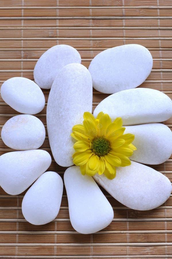 Pietre bianche e fiore giallo fotografia stock