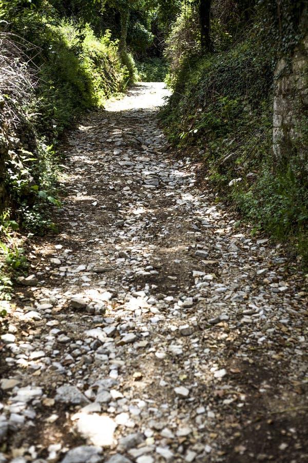 Pietre bianche indicate su un piccolo percorso che conduce attraverso i cespugli con gli alberi ombreggiati Le pietre sono livell immagine stock