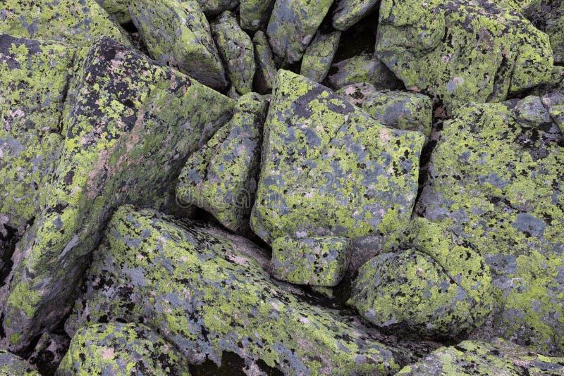 Pietre della montagna dei fiori grigi e verdi e gialli sulla roccia fotografie stock libere da diritti
