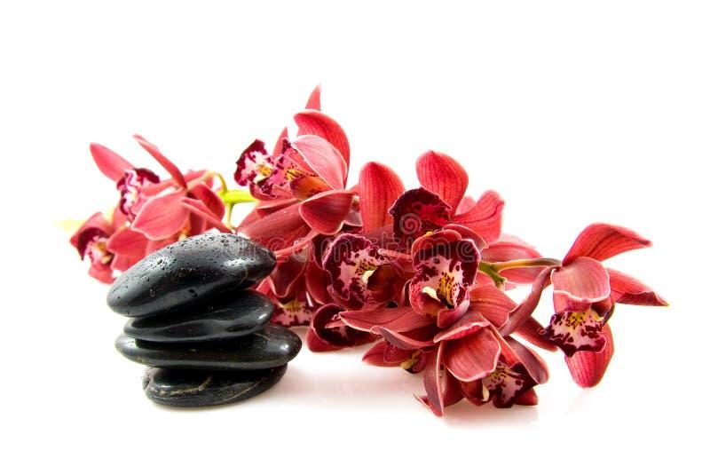 Pietre della stazione termale con l'orchidea rossa fotografie stock libere da diritti