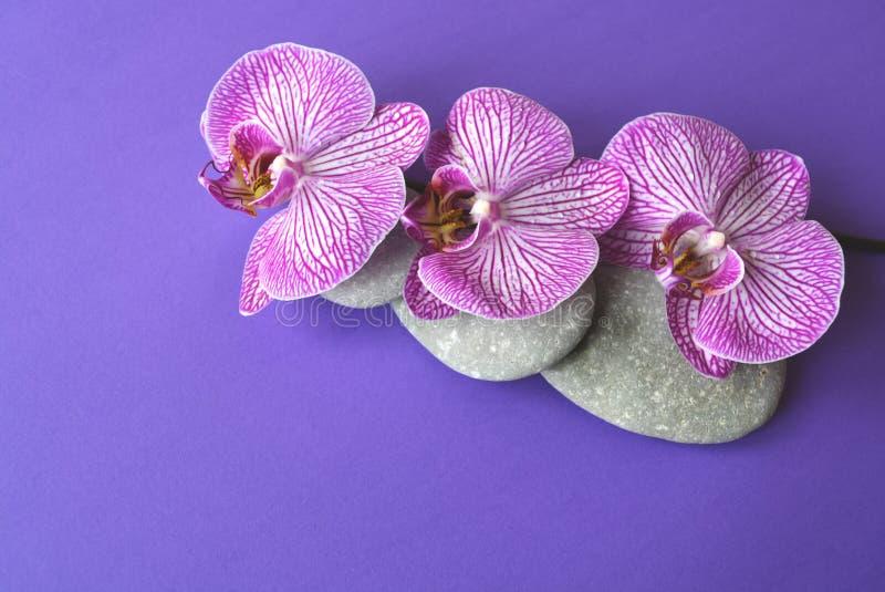 Pietre della stazione termale e fiore dell'orchidea immagine stock