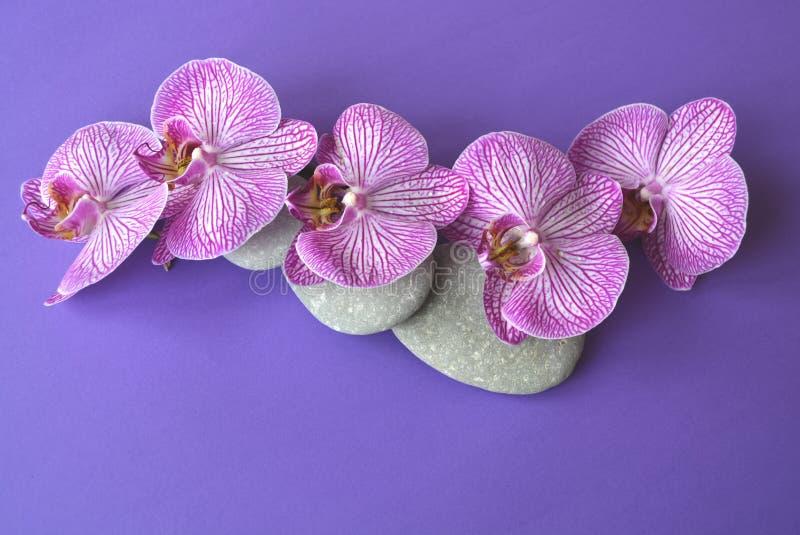 Pietre della stazione termale e fiore dell'orchidea immagine stock libera da diritti