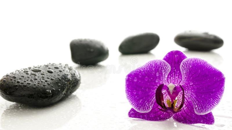 Pietre di massaggio e fiore dell'orchidea con le gocce di acqua immagini stock