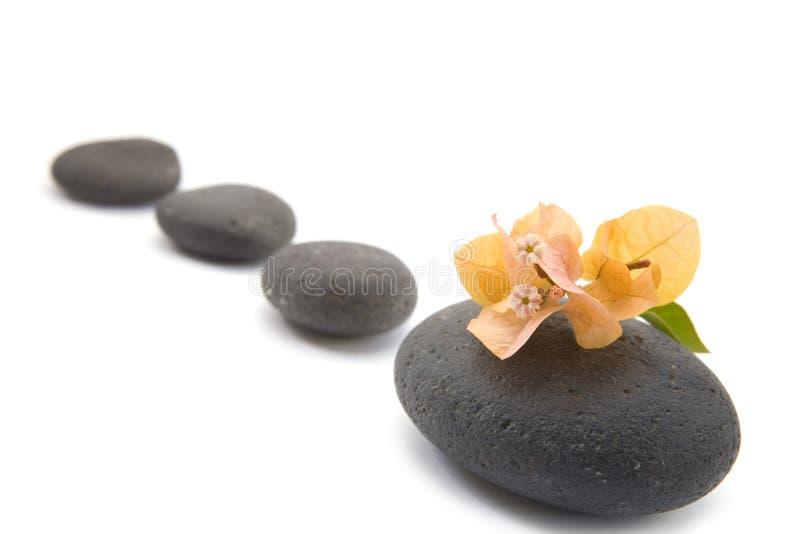Pietre di zen con i fiori di bouganvilla isolati. fotografia stock