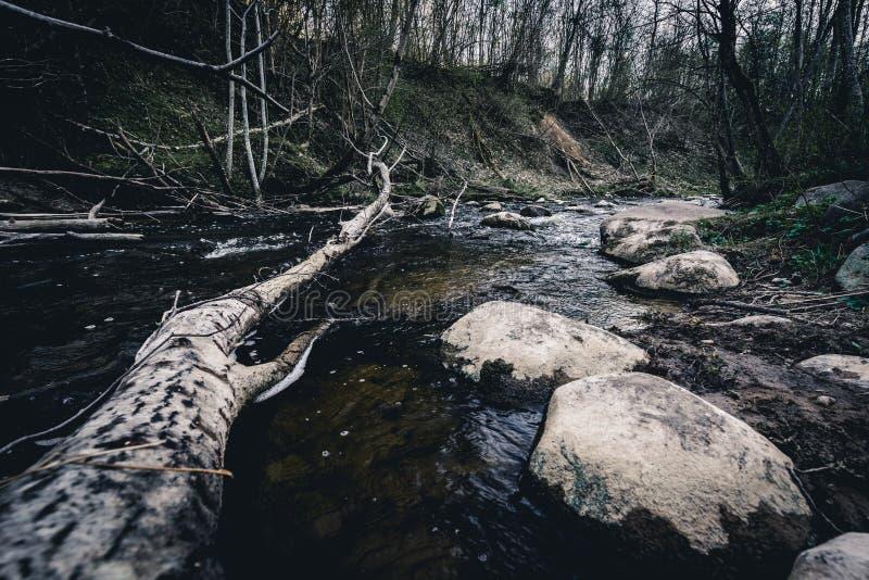 Pietre e vecchio albero rotto in un fiume Dukstos della montagna La Lituania, parco regionale di Neris fotografie stock libere da diritti