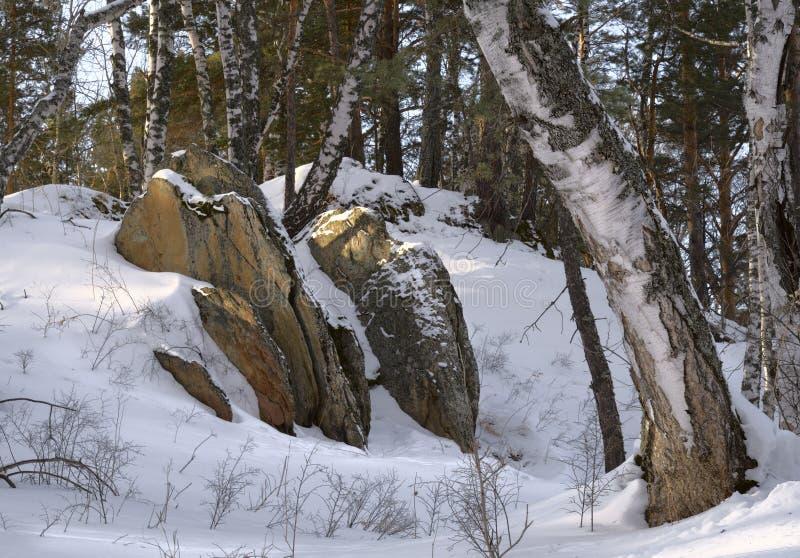 Pietre taglienti fra le betulle nell'inverno fotografia stock libera da diritti