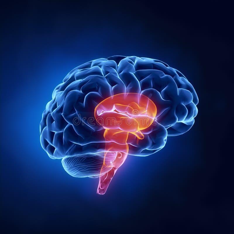 Pieza del cerebro del vástago stock de ilustración