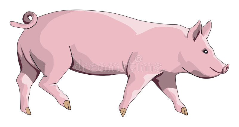 Pig royalty free illustration