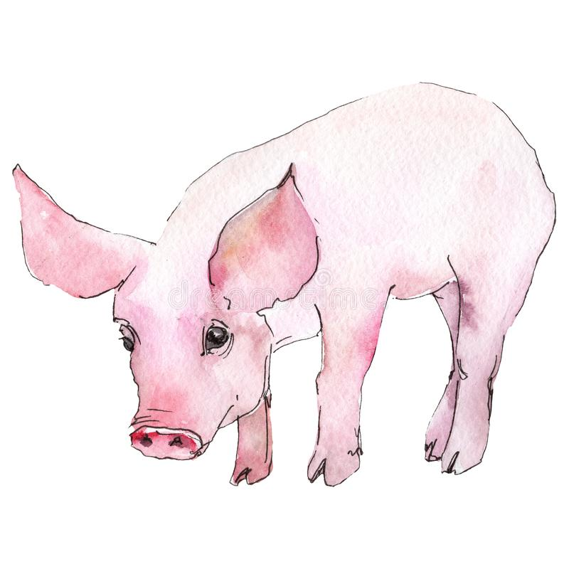 Pig animal in a watercolor style isolated. Aquarelle wild animal for background, texture, wrapper pattern or tattoo. vector illustration