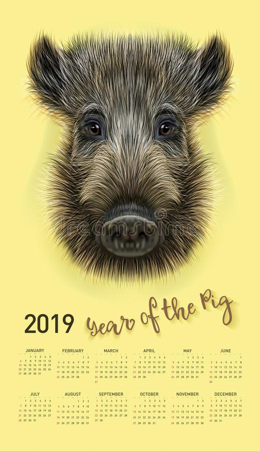 Pig calendar for 2019. Vector editable template with concept. Symbol of the year in the Chinese calendar. Realistic vector illustr. Pig calendar for 2019. Vector royalty free illustration