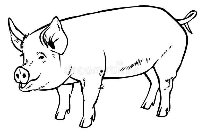 Pig drawing hand vector illustration