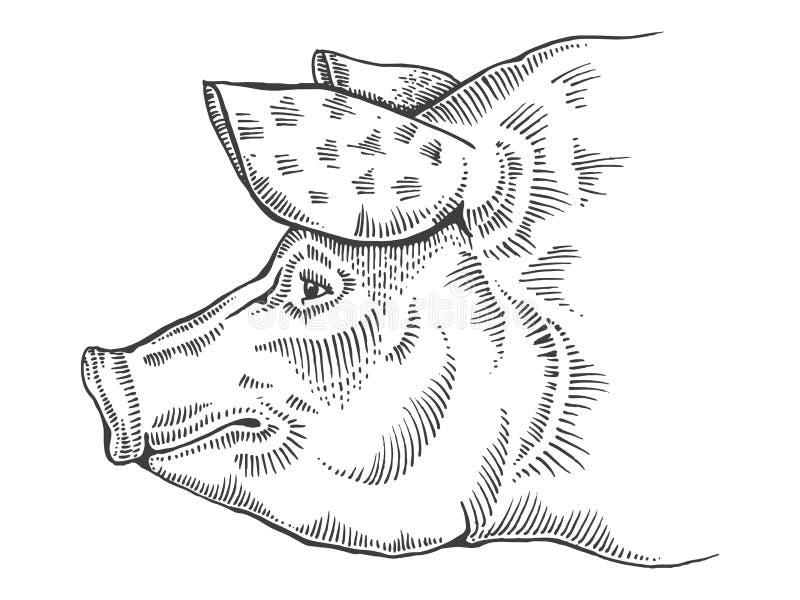 Pig head engraving style vector illustration. Pig head engraving vector illustration. Scratch board style imitation. Hand drawn image stock illustration