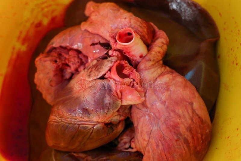 Pig Heart Stock Image Image Of Natural Biology Closeup 39623379
