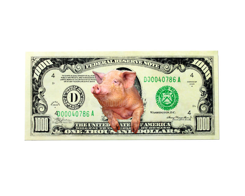 Pig looks out of one thousand dollar note instead the American president isolated stock image