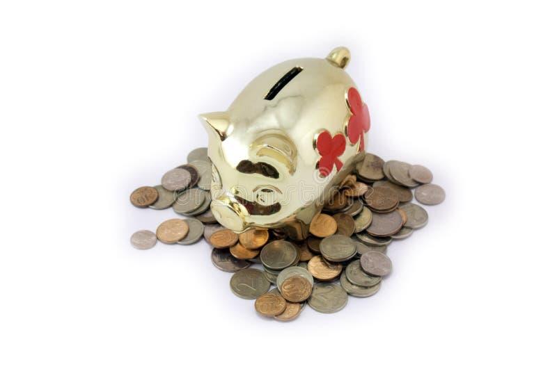 Pig piggy royalty free stock photos