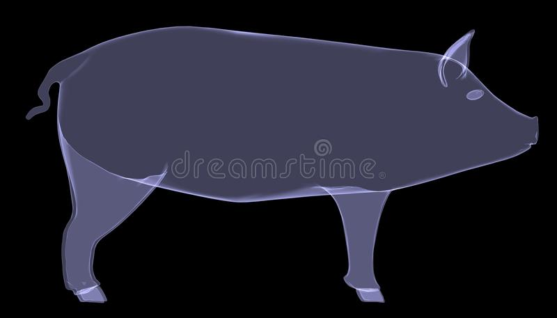 Pig. The X-ray render stock illustration