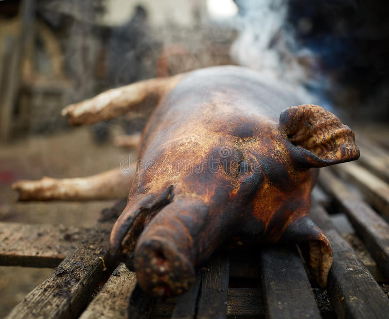 Pig ready to be butchered. Pig with burnt skin left to rest before getting butchered stock photo