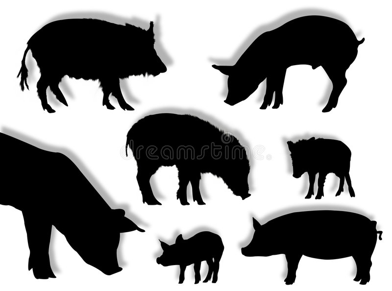 Pig silhouettes. Pig and wild boar silhouettes in different poses royalty free illustration