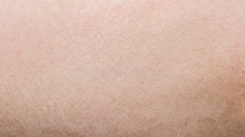 pig skin stock images