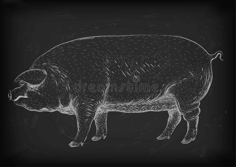 Pig, swine, hog sow piggy piglet piggie pigling brawn boar grown. Big eco farm animal snout. Vector square beautiful closeup profile side view white chalk stock illustration