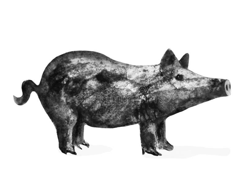 Pig - symbol of 2019 year, watercolor ink illustration, isolated on white stock illustration