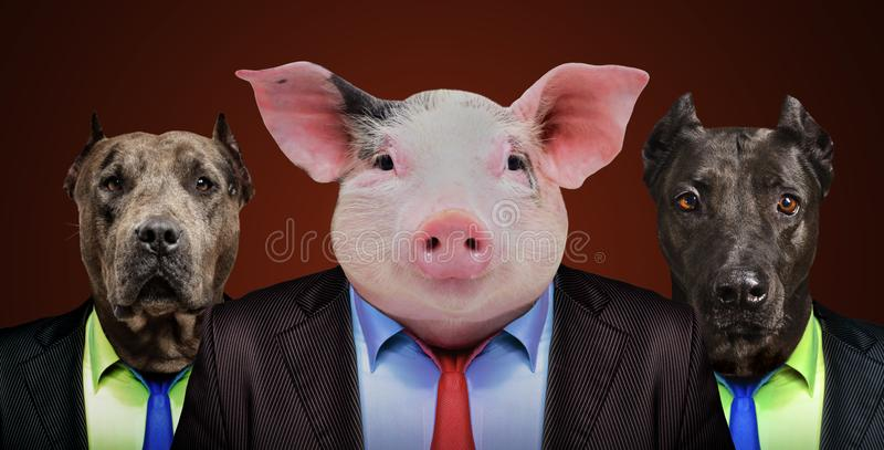 Pig and two dogs in business suits royalty free stock image