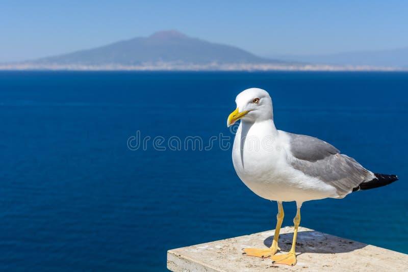 Pigeon à côté de la mer Pigeon gris et blanc observant plus de retour photographie stock libre de droits