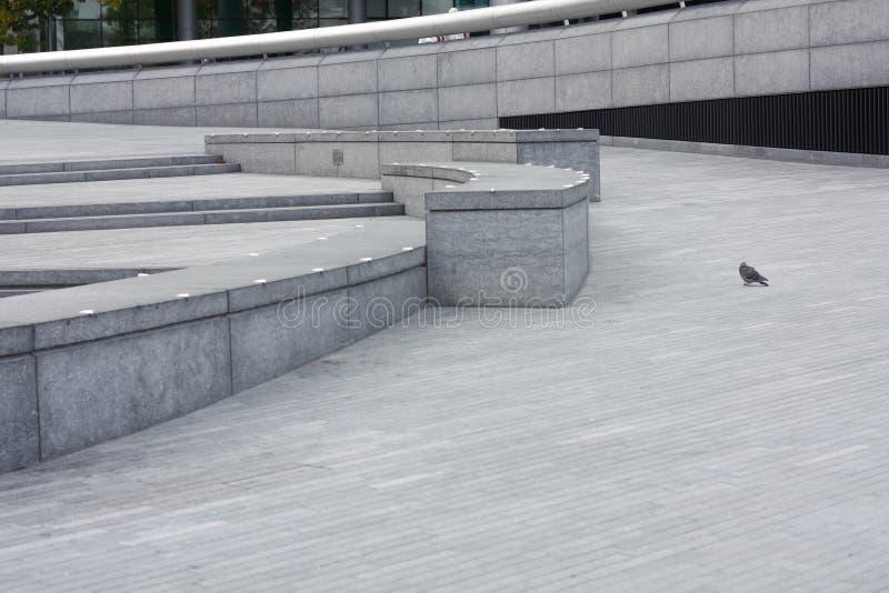 Pigeon images libres de droits