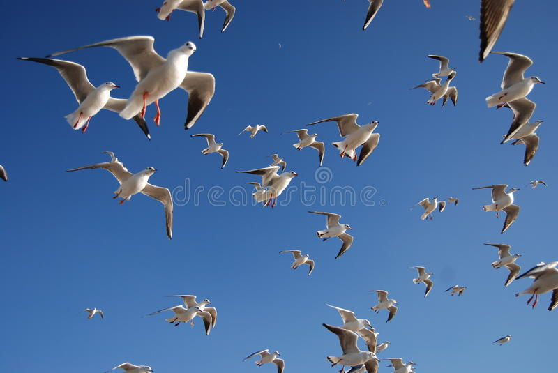 Download Pigeon stock image. Image of beauty, pest, feathers, pigeon - 13327101