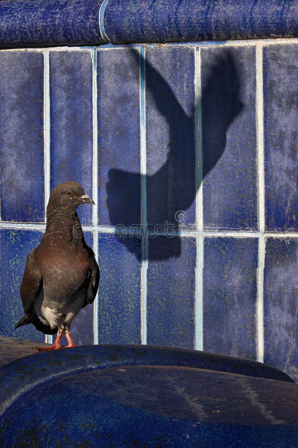 Pigeon. Shadow of a pigeon and other birds on a blue background royalty free stock photos