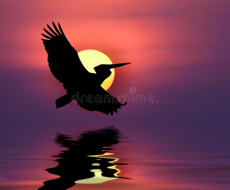 Download Pigeon image stock. Image du religion, clavette, blanc - 45359975