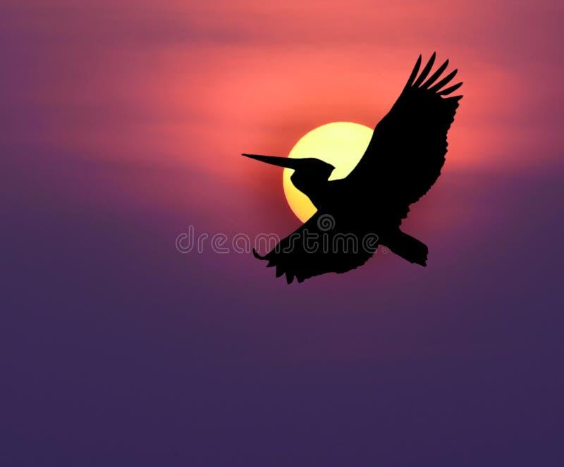 Download Pigeon photo stock. Image du blanc, noir, religion, liberté - 45359980