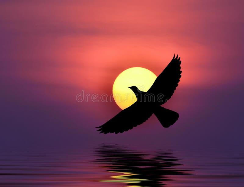 Download Pigeon image stock. Image du aile, pureté, haut, bleu - 45359981