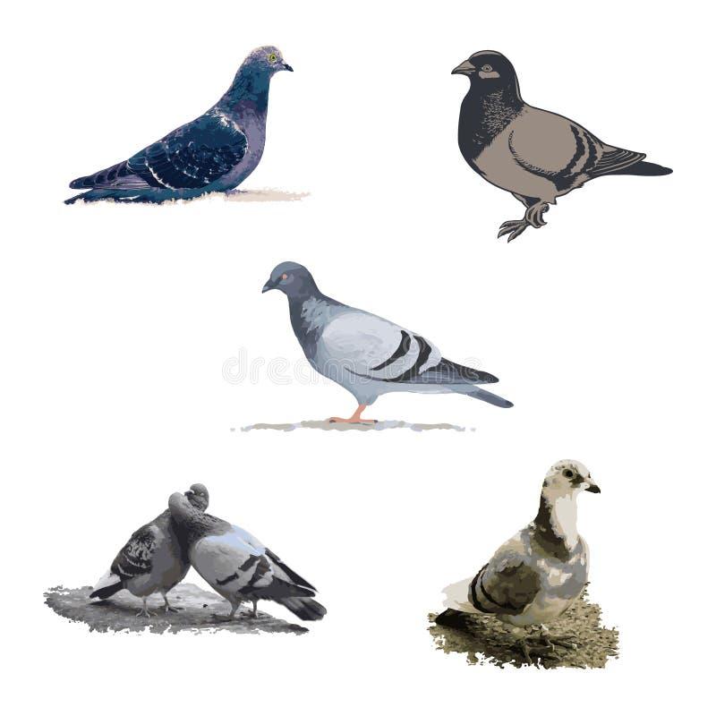 Pigeon abstrait de vecteur d'isolement sur un fond clair illustration stock