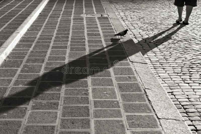 Pigeon on cobblestone stairs in Rome, black and white stock photo