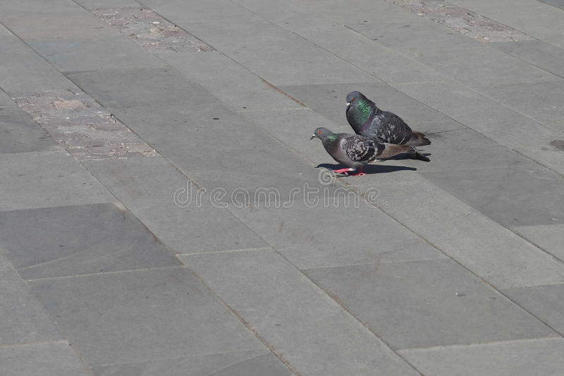 Pigeon courts. In the park royalty free stock photo