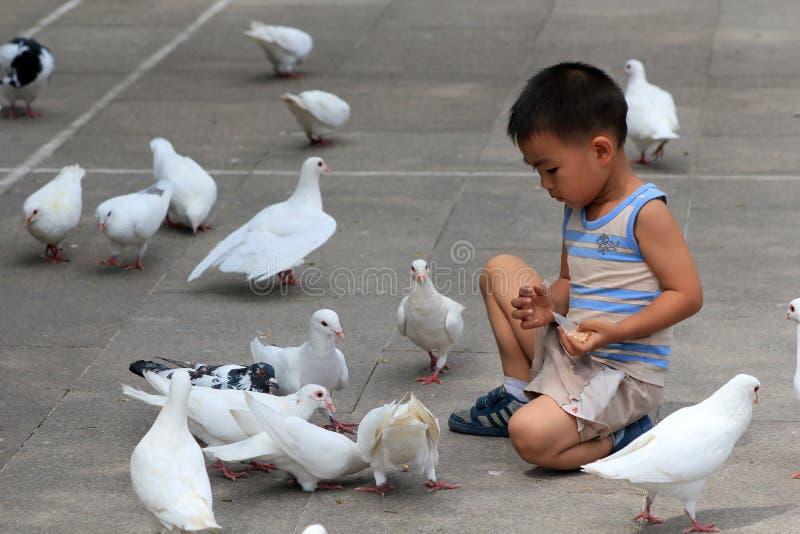 Pigeon de blanc d'alimentation d'enfant image stock