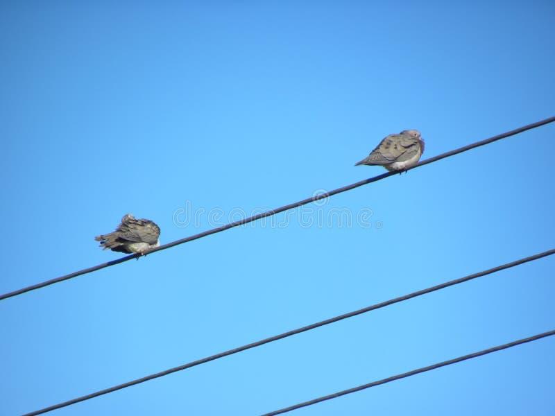 Pigeon deux sur le fil dans le ciel image libre de droits