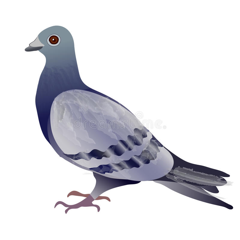 Pigeon or Dove royalty free illustration