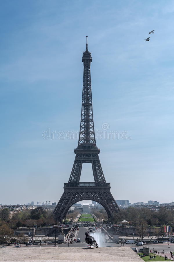 The pigeon and the eiffel tower royalty free stock images