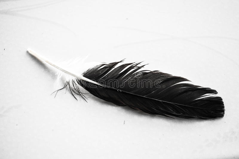 Pigeon Feathers royalty free stock photography