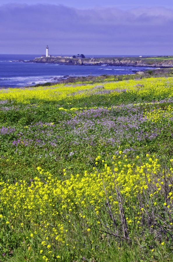 Pigeon Point Light House. Pigeon Point lighthouse with blue ocean and surf with wild mustard in the foreground stock images