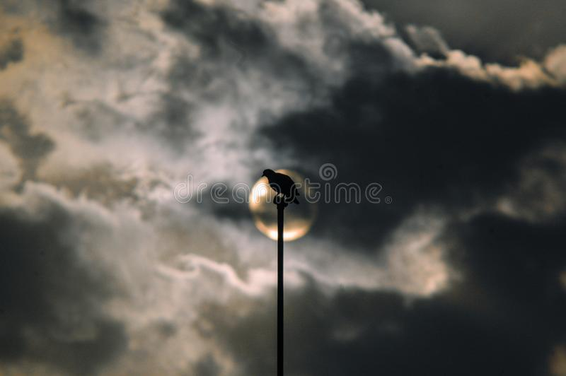 A pigeon sitting on a pole directed to the sun stock photo