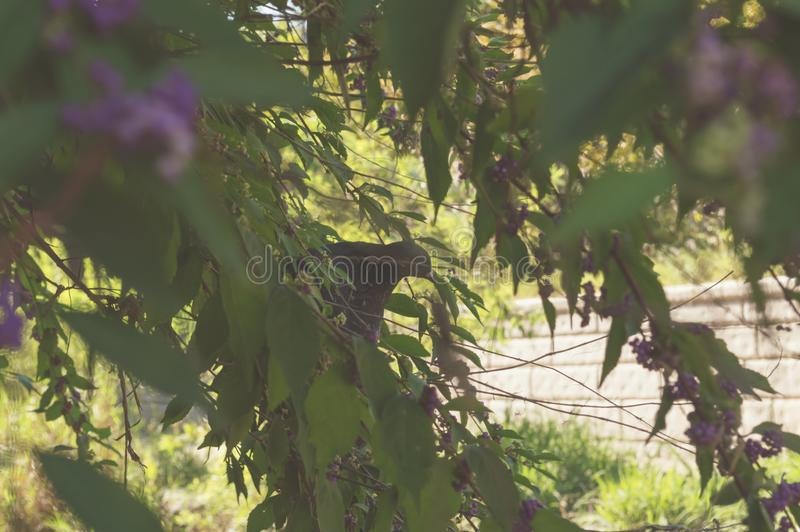 Pigeon sitting on a tree branch royalty free stock image