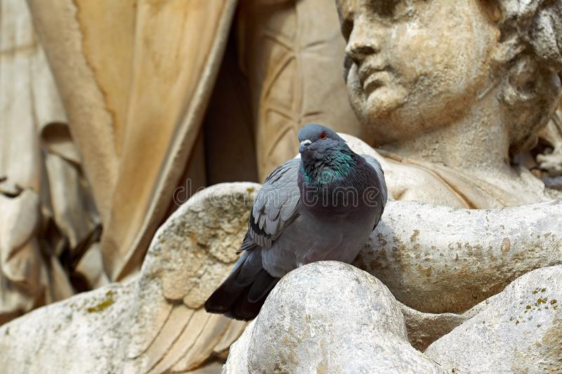 Pigeon statue. Pigeon angel statue Paris France royalty free stock photography